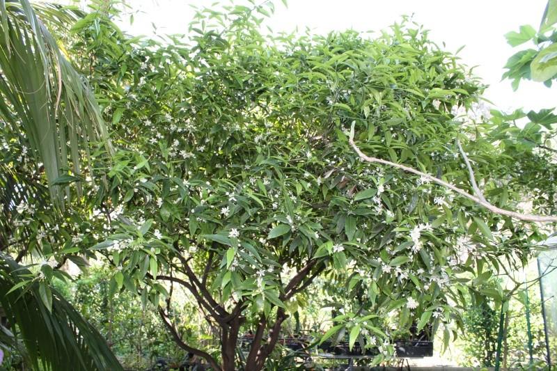 citrus10.jpg