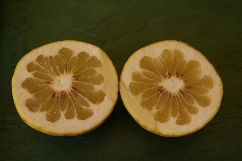 citrus14.jpg