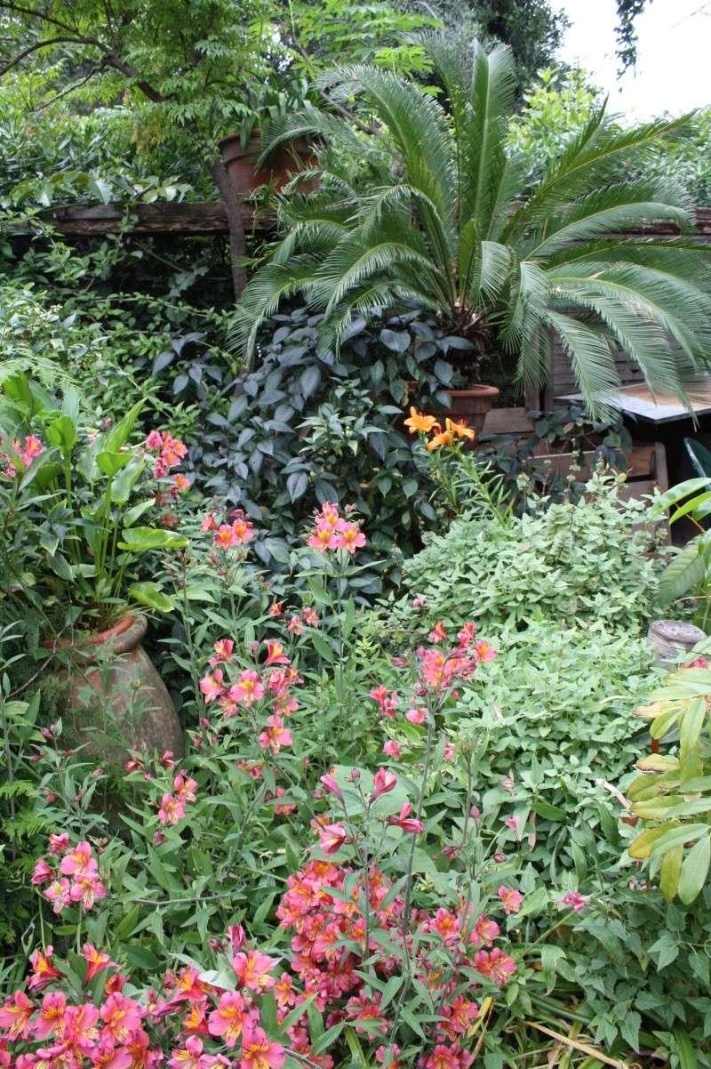06190 roquebrune cap martin jardin de jean06 page 7 au jardin forum de jardinage. Black Bedroom Furniture Sets. Home Design Ideas
