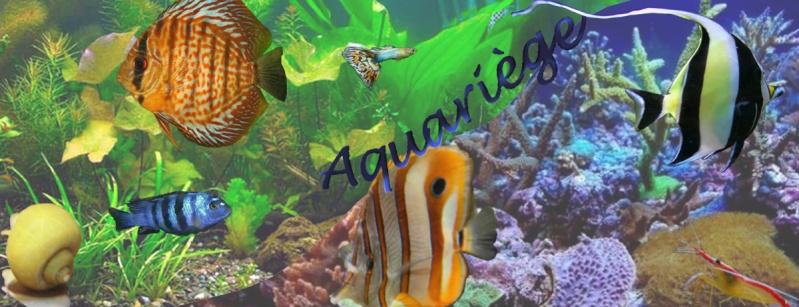 aquariege