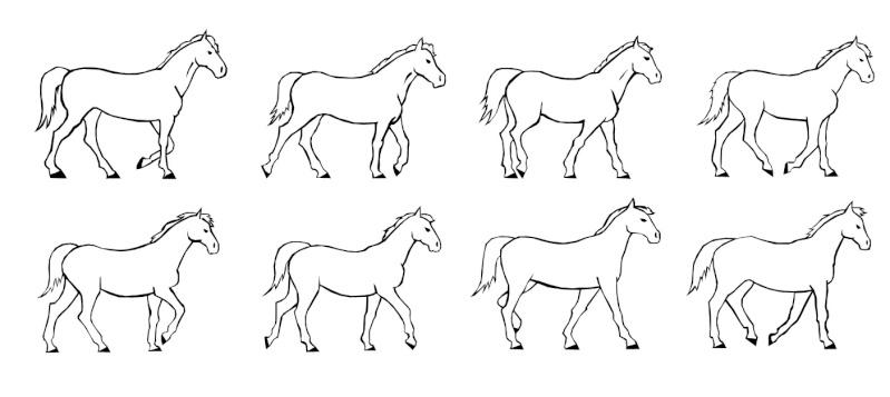 Dessin les allures du cheval - Comment dessiner un cheval au galop ...