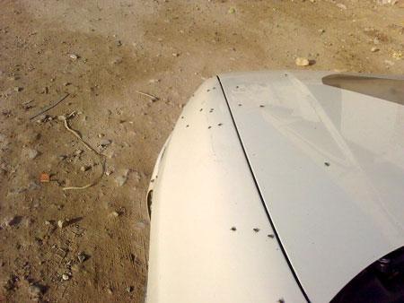 La grande invasion des mouches domestiques - Invasion de mouches pourquoi ...