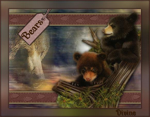 bears10.jpg