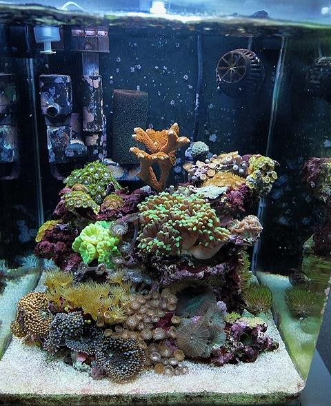 Achat aquarium solde for Aquarium en solde