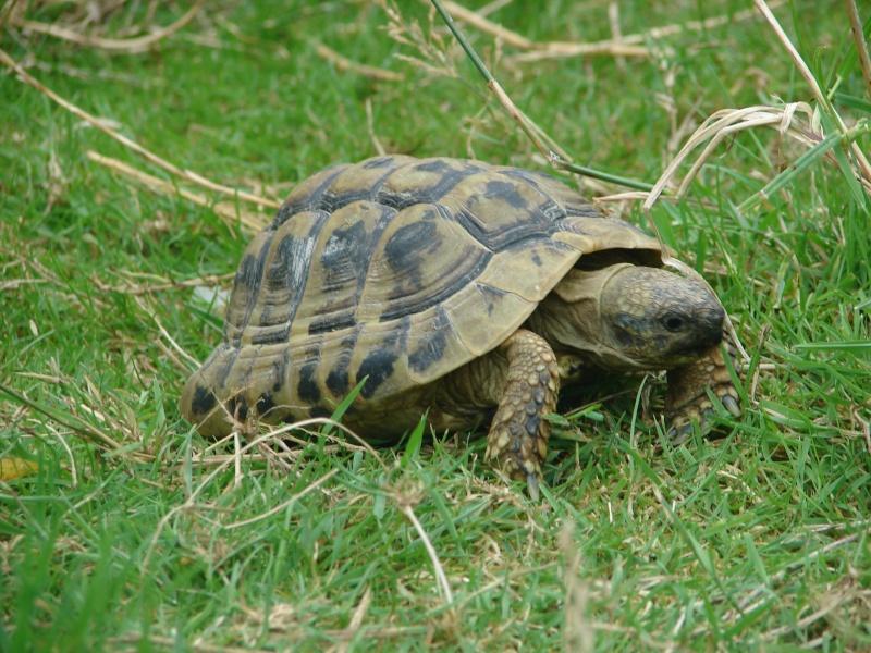 Alligator bay - Bassin tortue floride strasbourg ...