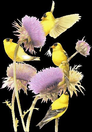 Résultat d'images pour Gifs oiseaux fleurs