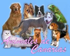 Animales de Canarias