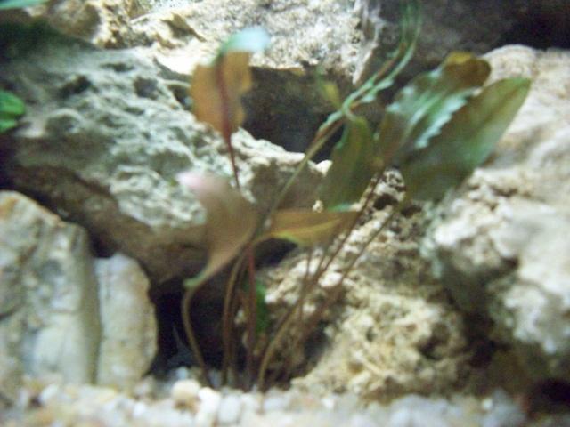 mon aquarium 30 litres refait a neuf remi74