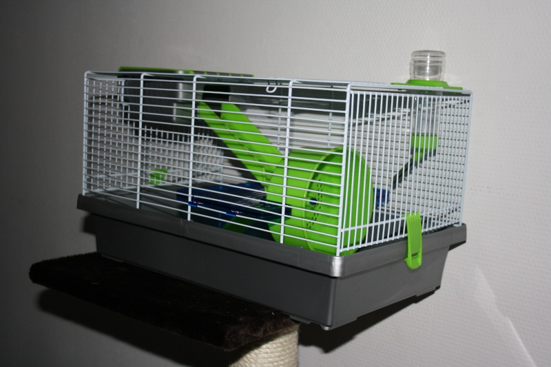 vends cage mica souris hamster nain. Black Bedroom Furniture Sets. Home Design Ideas