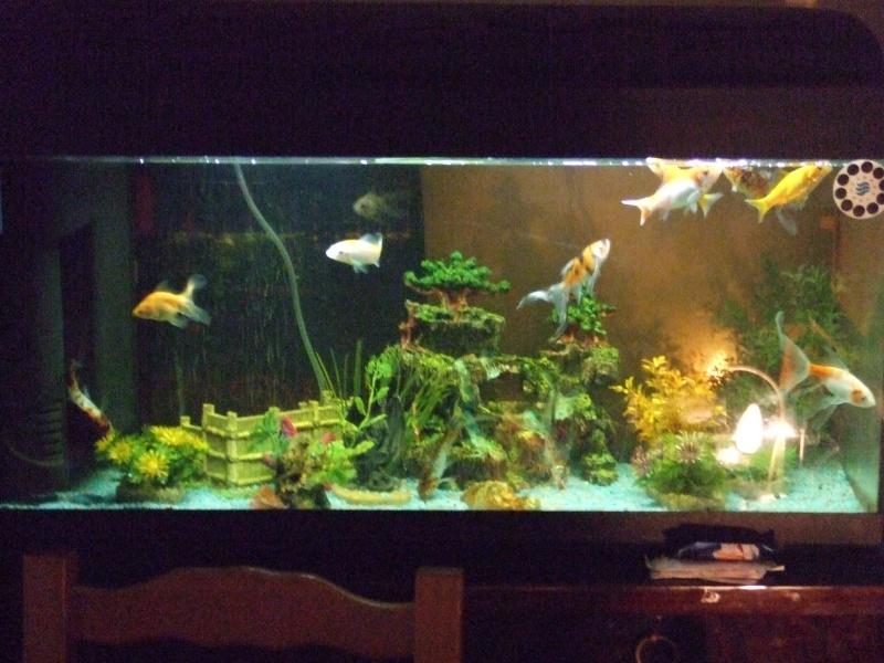 Bonjour voici mes bacs pr sentation des bacs forum for Aquarium a la maison
