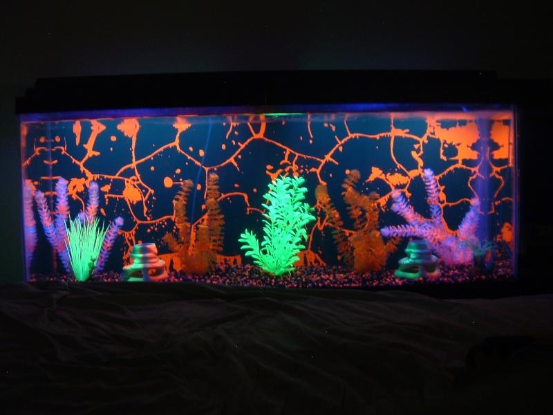 glofish electric green tetra page 4 the planted tank