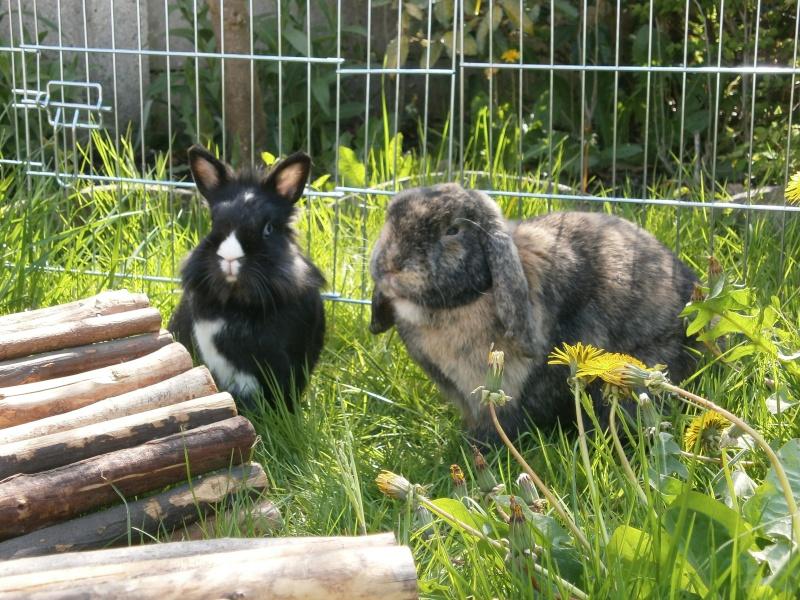 Toukie et Choupette les lapins