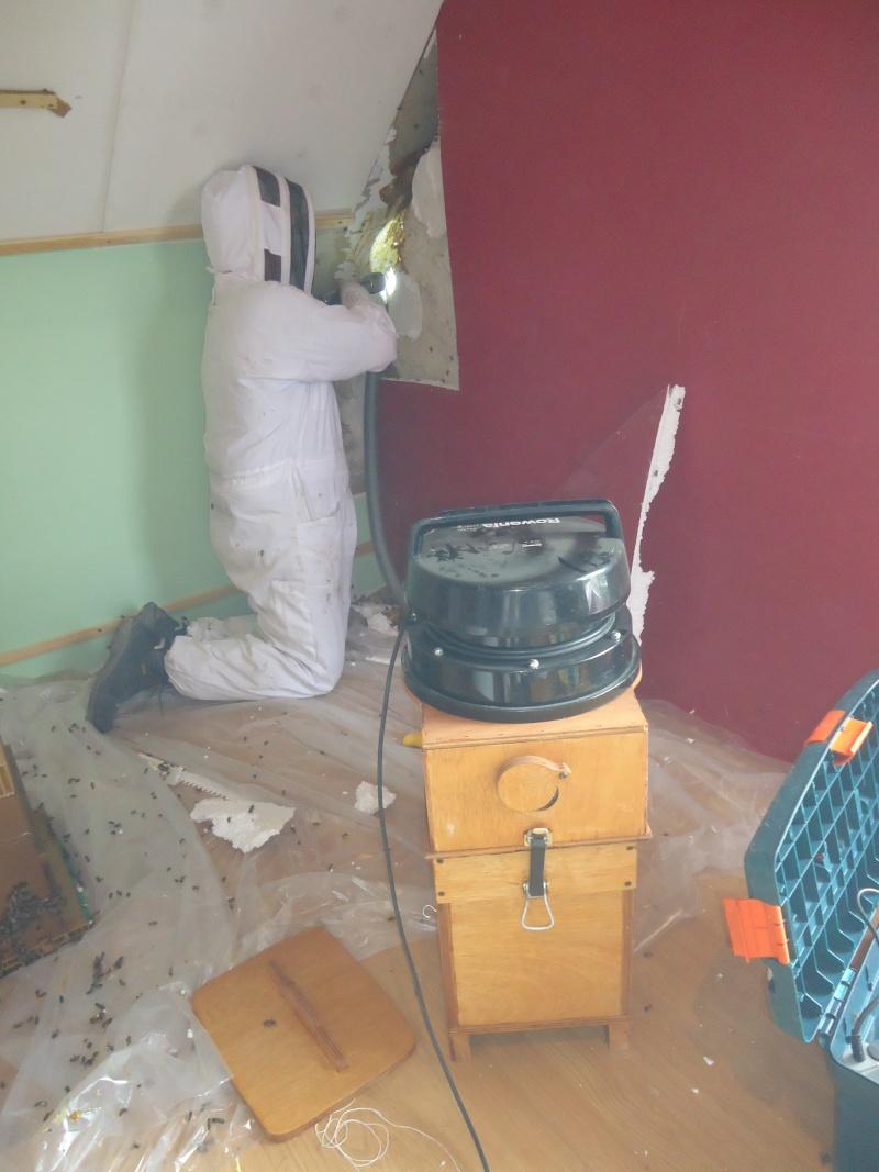 destockage noz industrie alimentaire france paris machine n eori douane. Black Bedroom Furniture Sets. Home Design Ideas