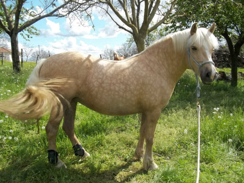 double poney a donner